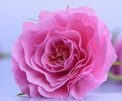 Rosa carta crespa